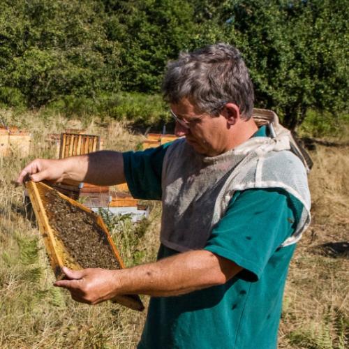 Artisans et producteurs du Haut Languedoc. Alain Mérit apiculteur portrait