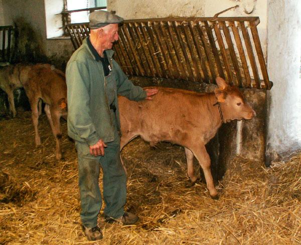Artisans et producteurs du Haut Languedoc. Eric Grousset boucher-charcutier. Elevage veau limousin